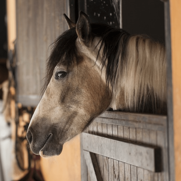 Wildfires: Preparation and Evacuation Tips for Horse Owners
